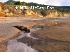 Elephant Seal  126 Thumbnail  Ano_Nuevo_1147_Crop_V_Contrast_UnS_4x6