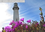 Pigeon Point Lighthouse 14 Thumbnail 5607