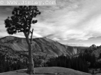 Yosemite 3 Thumbnail 220_2033_S_Auto_Curves_BW_Red